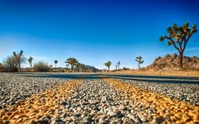 Picture road, horizon, Joshua Tree National Park