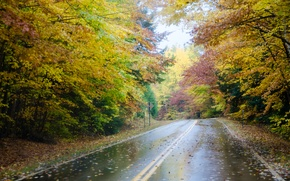 Picture road, autumn, forest, trees, fog, rain, forest, Nature, road, rain, trees, autumn, fog, fall