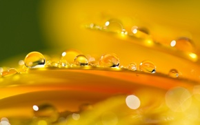 Wallpaper orange, glare, petals, flower, drops