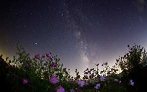 Picture space, stars, flowers, night, space, the milky way
