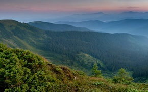 Picture mountains, Ukraine, panorama, Carpathians, forest, Transcarpathia