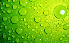 Wallpaper bright, green, drops