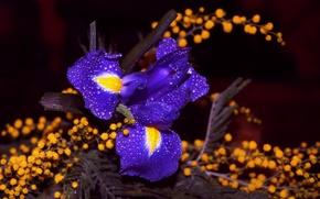 Picture drops, petals, bokeh