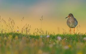 Picture grass, flowers, birds, wildlife