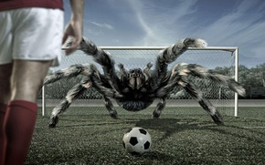 Wallpaper the ball, football, spider, tarantula, gate