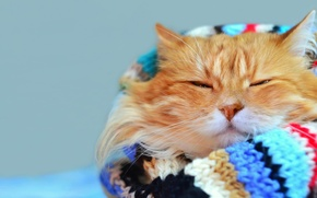 Picture cat, mustache, look, bright, stay, blur, scarf, red, muzzle, cat, Tomcat, bokeh, foxy, wallpaper., warm, ...