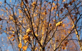 Picture autumn, the sky, leaves, birch, real photo.
