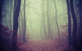 Picture fog, road, trees, foliage, forest