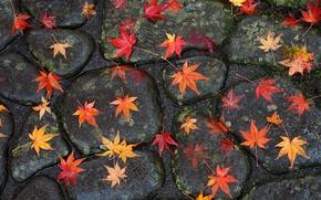 Picture road, autumn, leaves, stones, bridge