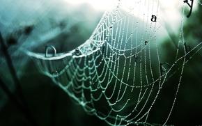 Picture Web, forest, rain, drops
