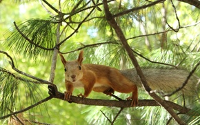 Wallpaper animal, nature, trees, protein, squirrel, bokeh, branches, trees, animal, branches, nature, bokeh, 2560x1600