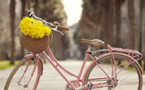Picture flowers, bike, the city, alley