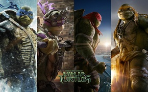 Picture TMNT, Raphael, Leonardo, Donatello, Donatello, Leonardo, Michelangelo, Teenage Mutant Ninja Turtles, Michelangelo, Teenage Mutant Ninja …