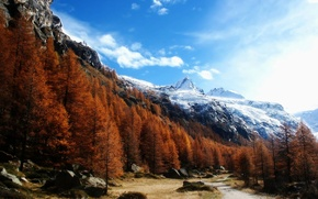 Picture forest, the sky, trees, mountains