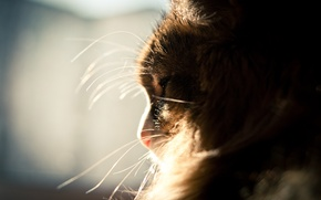 Picture mustache, the sun, fluffy, Cat, window, sleeping