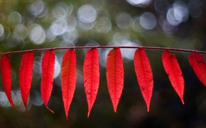 Picture leaves, macro, red, background, widescreen, Wallpaper, blur, leaf, wallpaper, leaves, leaf, widescreen, background, leaves, macro, …