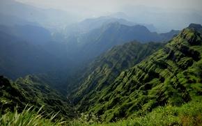 Picture grass, flowers, mountains, birds, fog, stream, gorge
