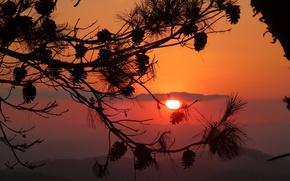 Picture the sky, the sun, clouds, sunset, branch, silhouette, bumps, pine