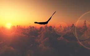 Wallpaper glare, flight, bird, the sun, the sky, clouds