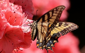 Picture flower, butterfly, petals, insect, moth