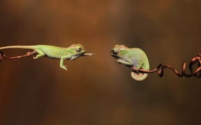 Picture branches, 1920x1080, branches, chameleon, reptiles, reptiles, chameleons