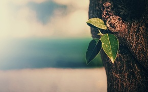 Picture leaves, macro, background, tree, texture, trunk, bark