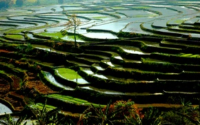 Picture nature, water, china, vegetation, rice paddies, riziéres Yunnan, rice terrace, rice field