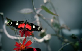 Picture color, macro, butterfly, flowers, flower