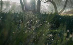 Picture grass, the sun, nature, grass, sunshine, nature