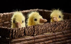 Picture Three, Ducks, Small, Trash