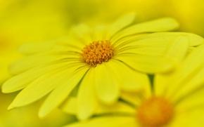 Picture flower, nature, paint, petals