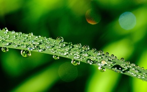 Picture widescreen, leaf, leaves, HD wallpapers, Wallpaper, leaves, dew, water, greens, full screen, green, background, fullscreen, ...