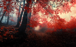 Picture autumn, forest, leaves, trees, nature, fog, red, red, forest, Nature, falling leaves, grove, path, trees, …