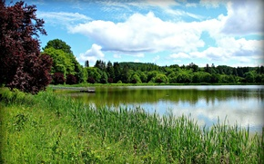 Picture the sky, grass, clouds, trees, lake