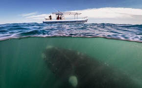 Picture the ocean, boat, kit, scientists, whale under boat