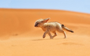 Picture sand, desert, Fox