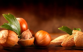 Picture table, leaves, nuts, almonds, forest