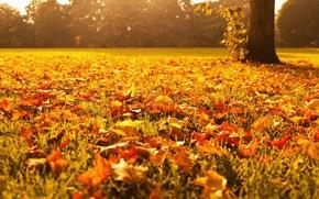 Wallpaper autumn, grass, macro, light, trees, nature, foliage, yellow, Leaves, orange, gold