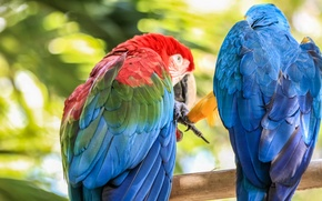 Picture summer, the sun, Summer, pair, Parrot, bird, Summer, Caribbean, Dominican Republic, Dominican Republic, Dominicana