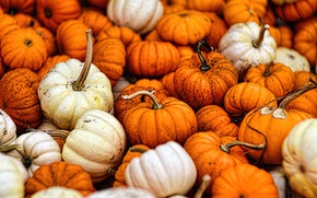 Picture autumn, fall, gourds