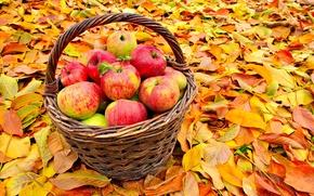 Picture autumn, leaves, basket, apples, fruit