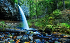 Picture forest, leaves, trees, stones, rocks, waterfall, stream, USA, oregon