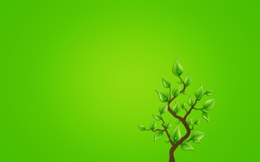Picture leaves, drops, tree, minimalism, branch, greenish background