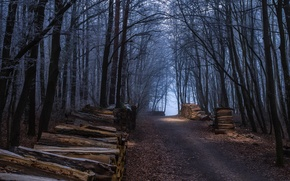 Wallpaper logs, forest, road, trees, autumn, wood