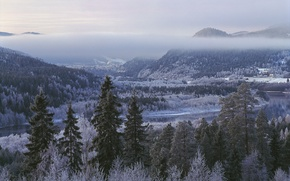 Picture winter, forest, trees, mountains, Sweden, Sweden, Lien, Jämtland