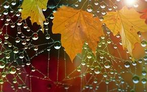 Wallpaper nature, autumn, leaves, drops