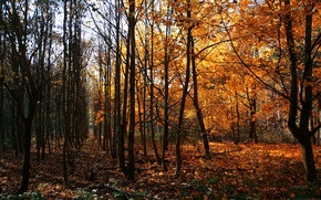 Wallpaper Trees, Germany, Autumn, Way Of Wood