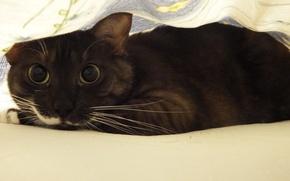 Picture cat, eyes, ambush