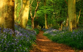 Picture road, forest, trees, flowers, nature, trunks, trail, spring, Path, fence