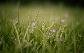 Picture flowers, macro, background, plants, nature, Wallpaper, glade, greens, flowering, summer, photo, grass